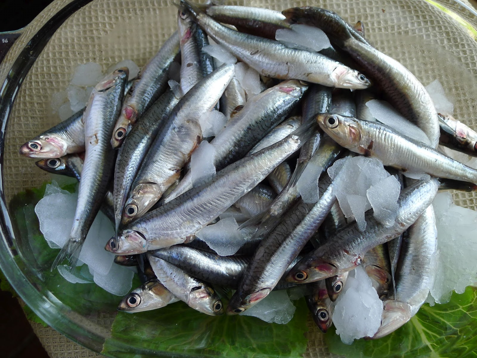 My kitchen in spain fresh anchovies small fish big flavor for Small fish pictures