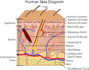 Recent discoveries prove that there are pain receptors present in the skin .