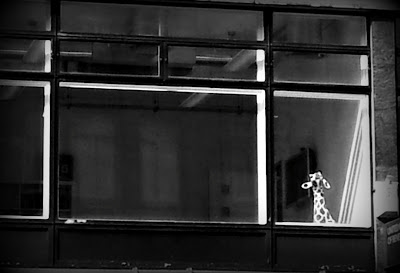 Giraffe left forlon in a window - London