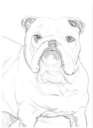 Bulldog pic