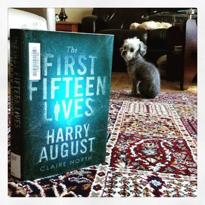 A hardcover copy of The First Fifteen Lives of Harry August stands upright near the front of the frame. Its blue-tinted cover features the title picked out in bright dots of white. The I in Lives is the silhouette of a person. A sleek grey poodle, Murchie, sits some distance behind the book, his back to the viewer but his head twisted so he appears in profile.