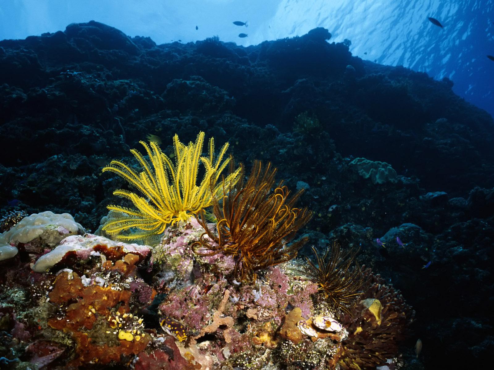 http://2.bp.blogspot.com/-2eVDZjiiotM/Tg4q4dakdMI/AAAAAAAABAs/nt3YytrwoDo/s1600/Underwater%2BWallpaper%2B%25252890%252529.jpg