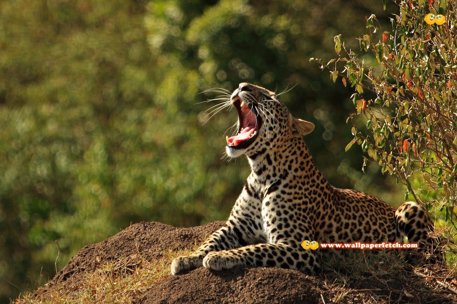 Wallpaper Fetch: 40 Beautiful Animal HD Wallpapers