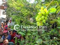 Berita Unik Fakta Bunga Melati Berbuah Anggur