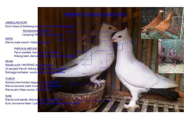 http://merpatiendemikindonesia.blogspot.com/