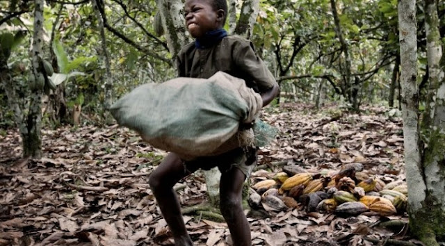 Hershey, Nestle and Mars Use Child Slaves To Make Your Chocolate