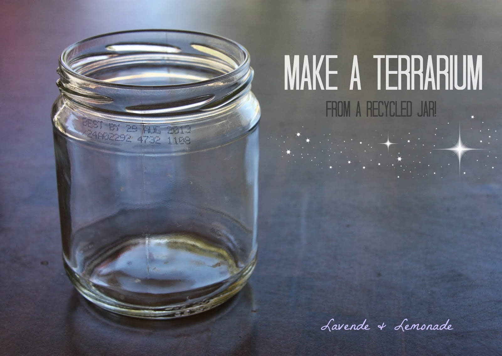 DIY: Make a Terrarium