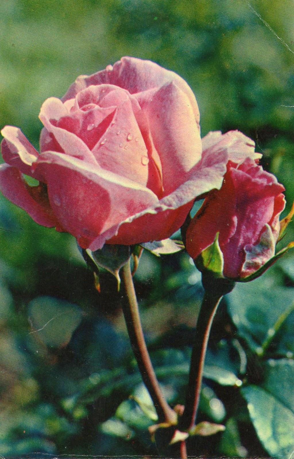 Видео открытка с цветами