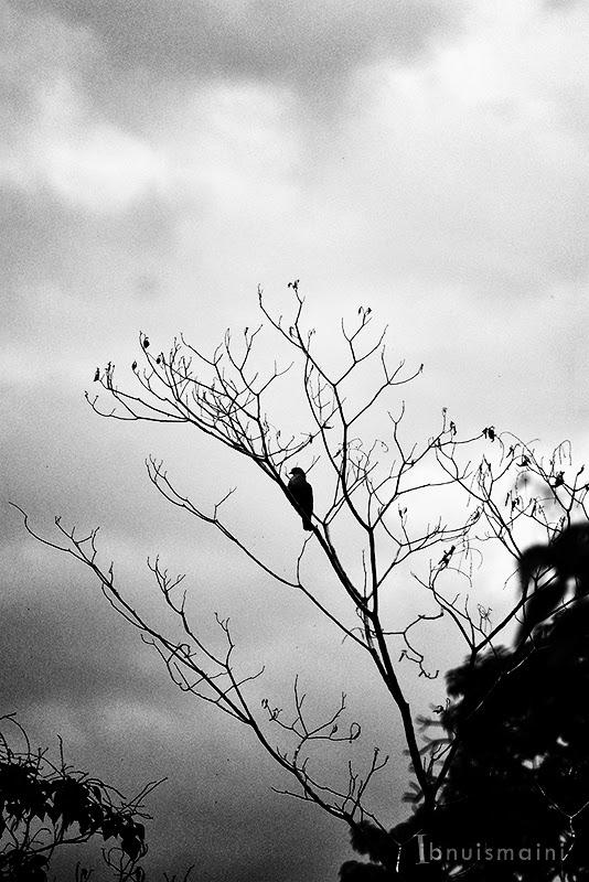 pokok, tree, kering, dying