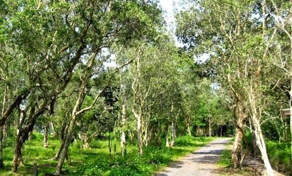 Kết quả hình ảnh cho rừng nguyên sinh bình châu