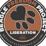 Giving laboratory beagles the freedom they deserve...