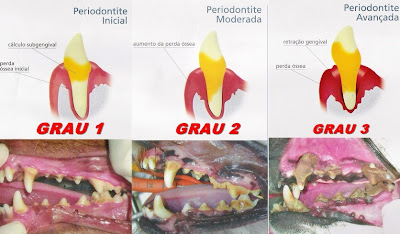 periodontite-caes
