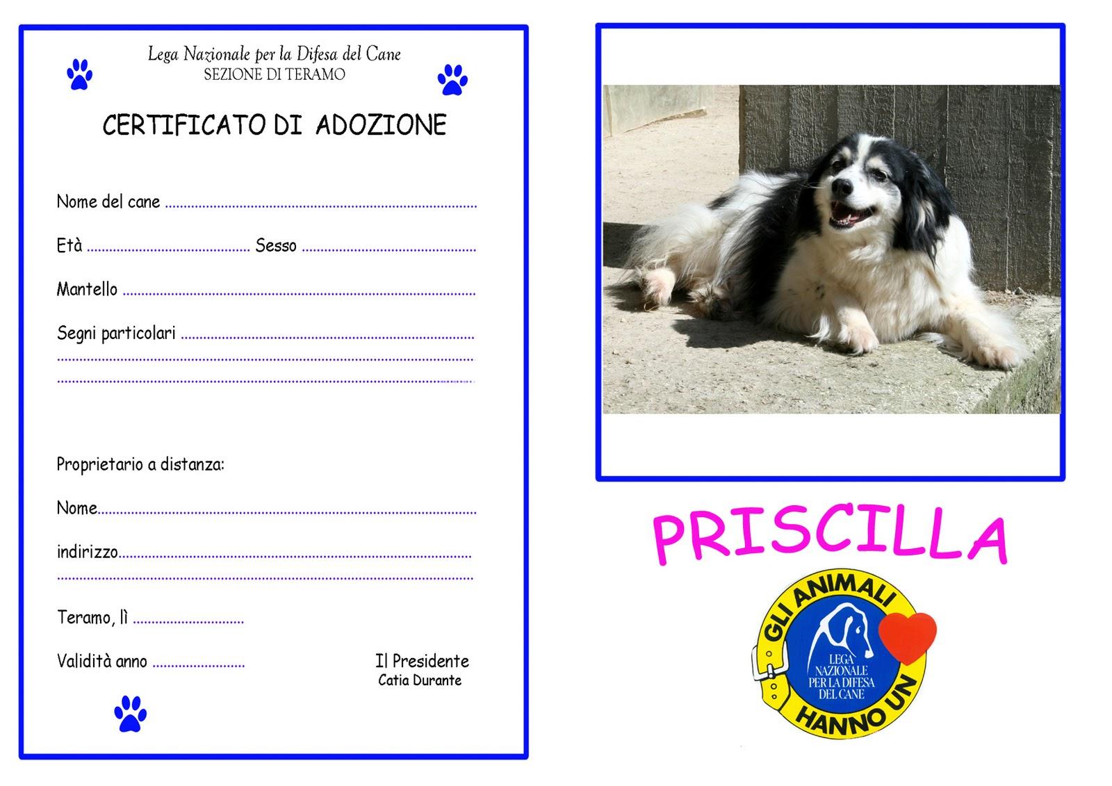 lega del cane teramo/ bellante: adozioni a distanza