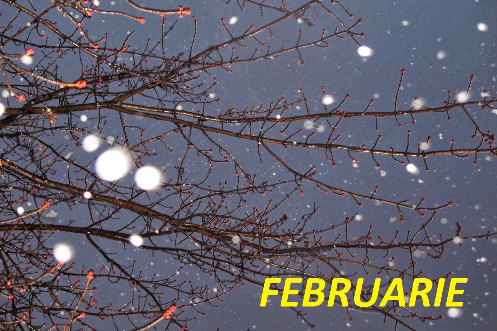 Astrologie horoscop februarie 2015