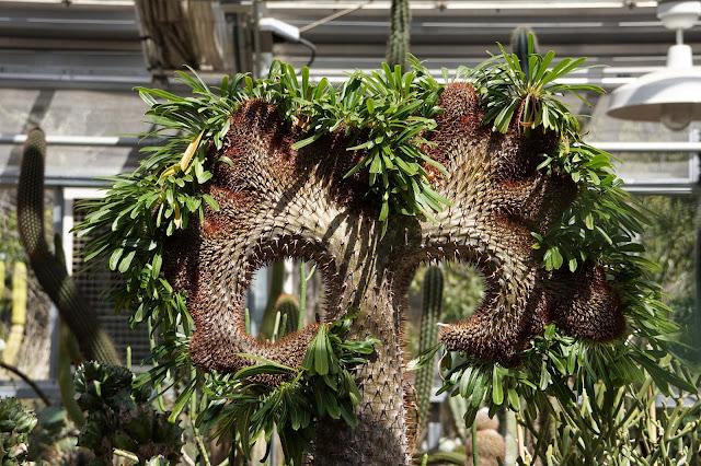 Posing cactus