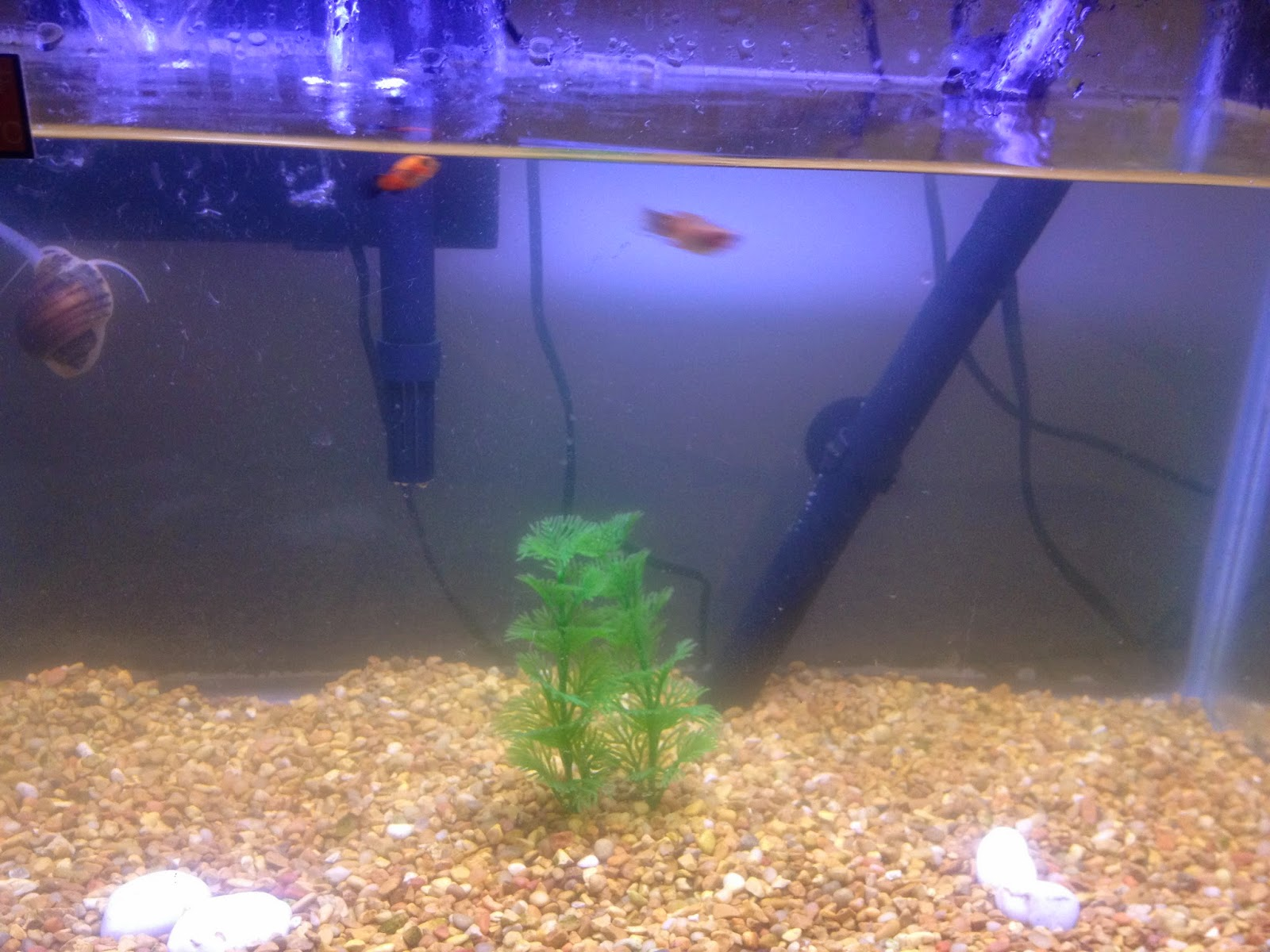Freshwater fish no filter - It Does Allow For A Quick Fix But Soon Enough Your Tank Will Be As Green As It Was Before In No Time