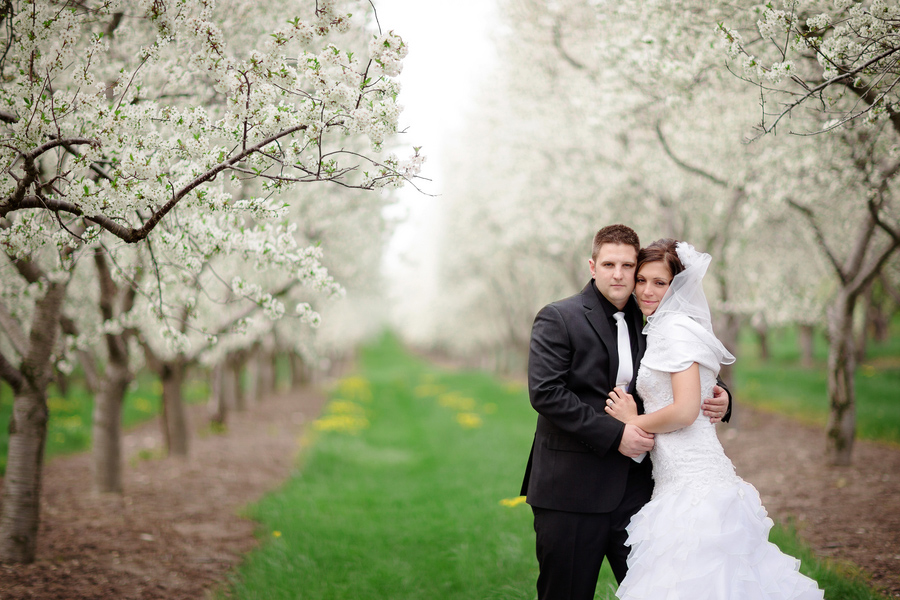 white cherry blossom trees, Traverse City, Michigan, Dan and Melissa Photography