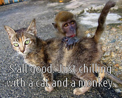 chilling monkey and cat