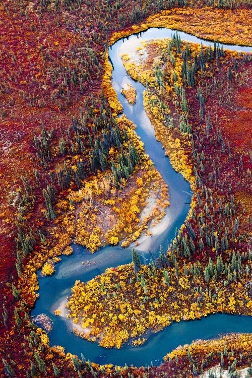 Alaskan tundra in autumn
