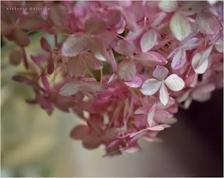 fae & flora