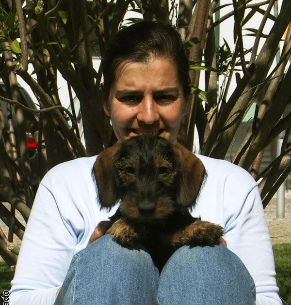 Bolsa P Levar Cachorro : Aradik quando come?ar a levar o cachorro ? rua