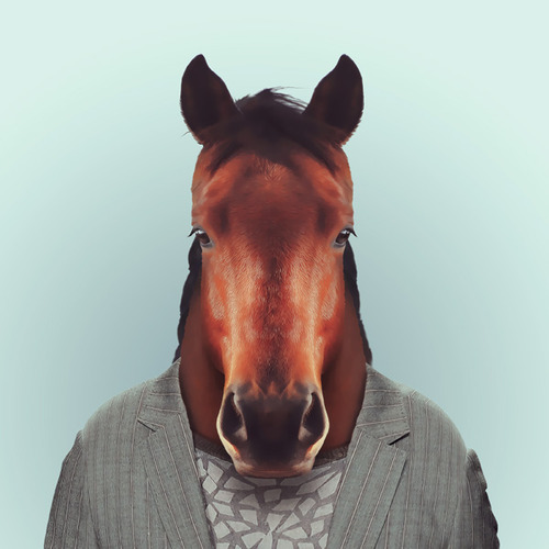 Funny animal Portraits