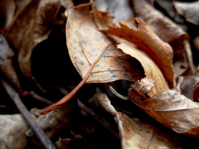 Dried Leaves Wallpaper