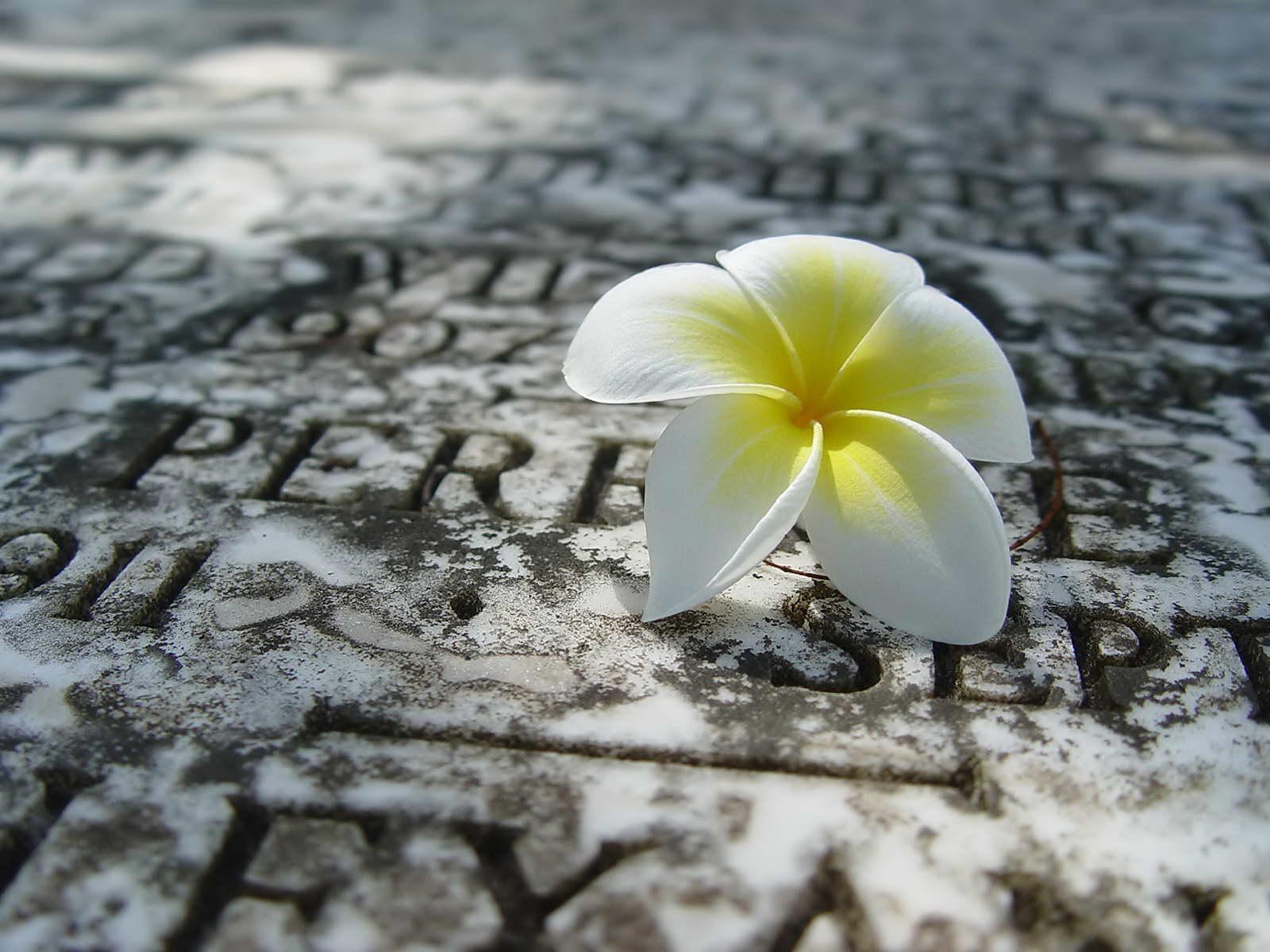 flor 5 petalos
