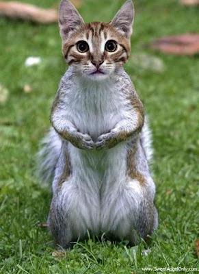 funny_picture_funny_cat_vandanasanju.blogspot.com