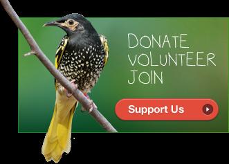 Birdlife Australia link here below