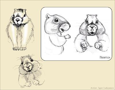 cute animal stuffed toy - marmot aka groundhog