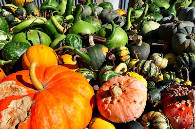 Pumpkins-Hickory-Ridge-Studio