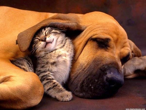 Photo chat avec chien