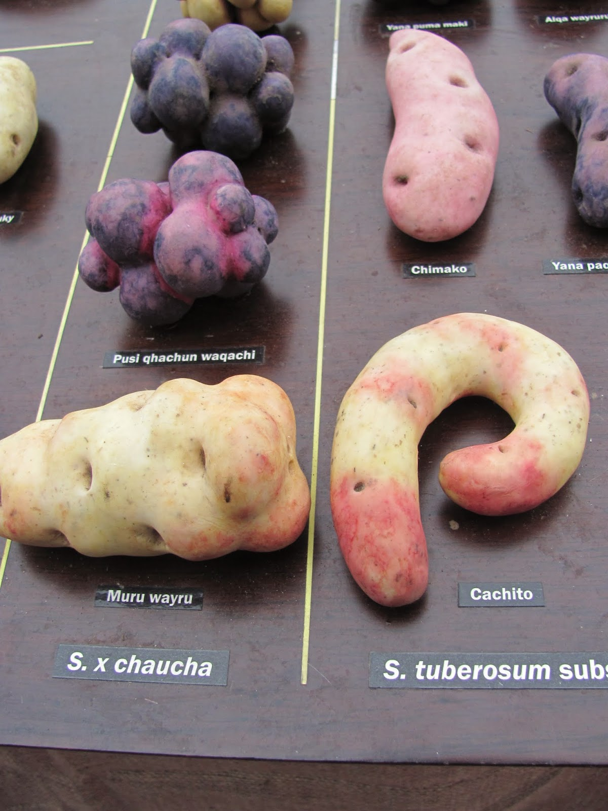 Unusually-shaped potatoes at Dublin Park(ing) Day 2014