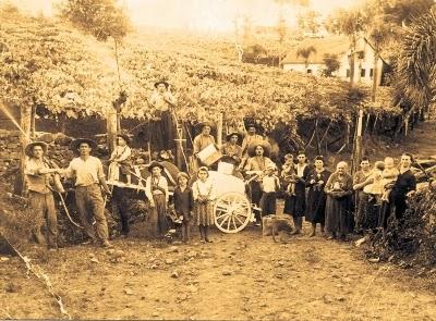 Imigrantes-Italianos-Colheita-Uvas-Vale-dod-Vinhedos-Serra-Gaucha
