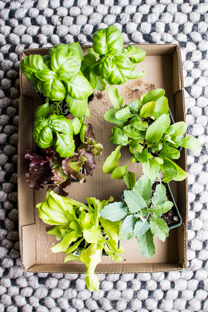 Flourishing Foodie How To Plant A Small Space Lettuce Garden