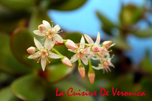 La Cuisine De Veronica 玉樹開花
