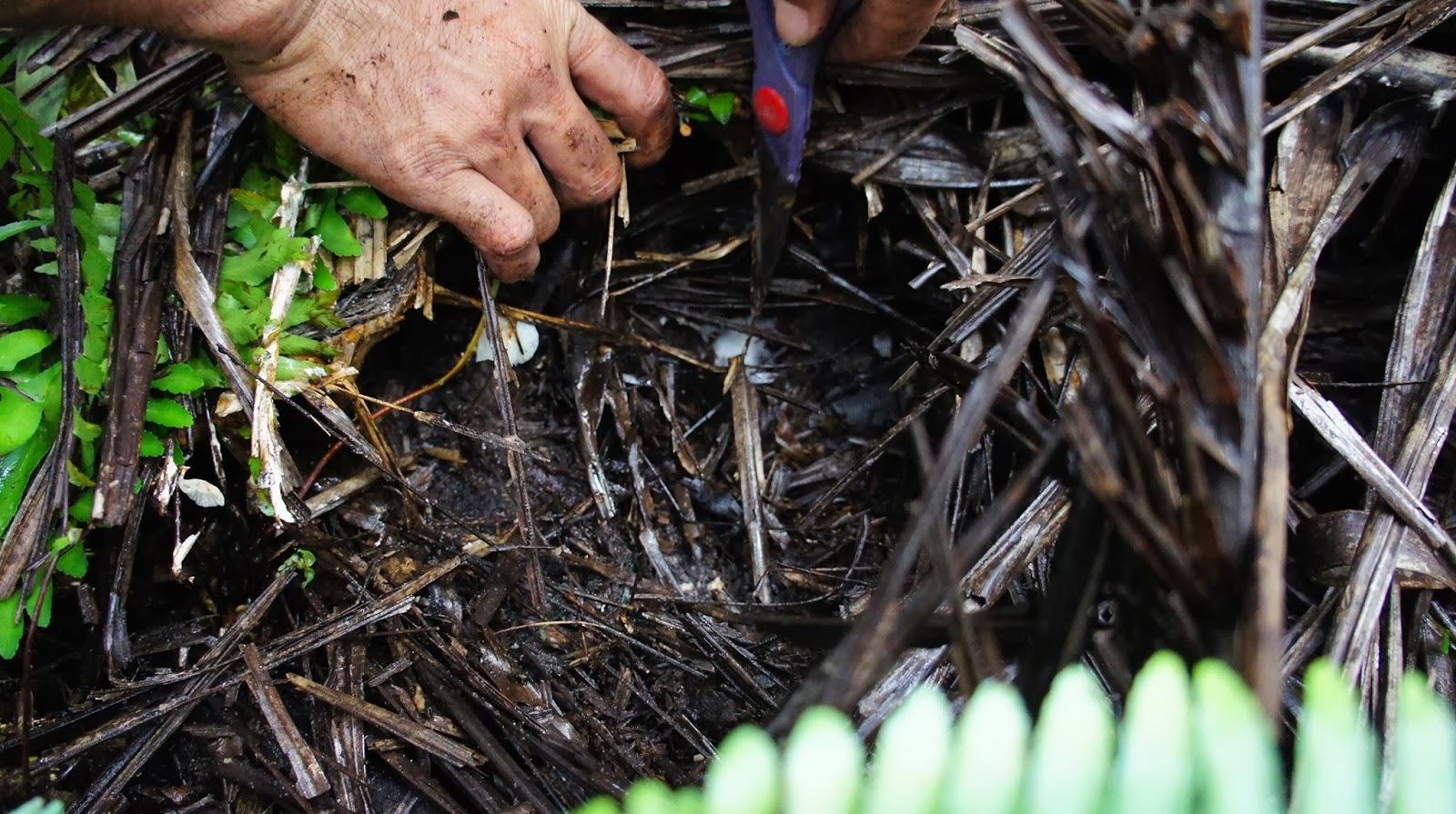 Smell of soil carbon nitrogen ratio for 0 4 soil carbon