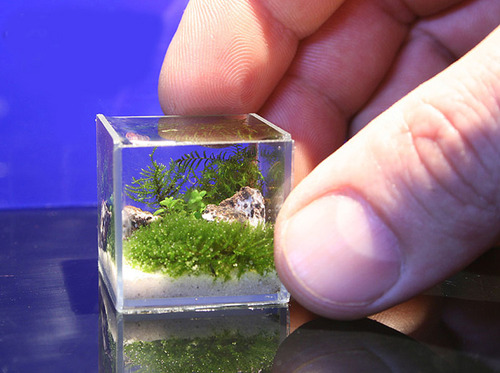 All about betta fish worldest smallest planted aquarium for Micro fish tank