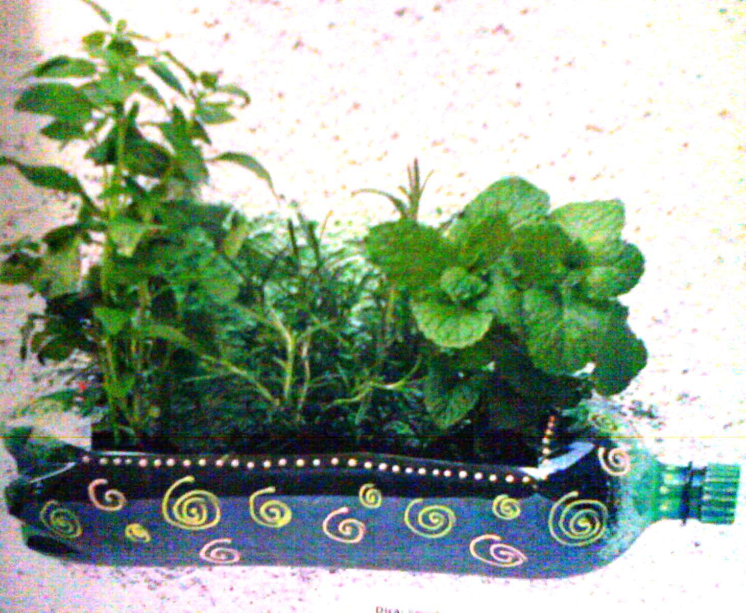 mini jardim em garrafas: da terra por que não termos uma mini horta em garrafas pet em casa