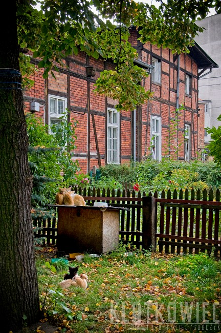 Bydgoszcz: koci mur pruski