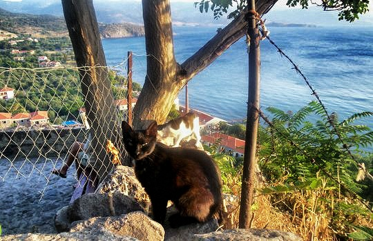 Cats from Molyvos, Lesbos