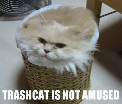 http://2.bp.blogspot.com/-2nNcze3rfyU/TcK8RriGpkI/AAAAAAAAACk/RI6nhld9Qbk/s1600/TRashcat+is+not+amused.jpg