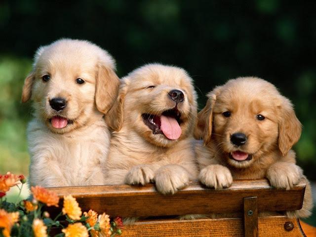 "<img src=""http://2.bp.blogspot.com/-2nOGNLzbc8U/Uq8O8SX6p6I/AAAAAAAAFog/C3HXVuU0iZY/s1600/ds.jpeg"" alt=""dogs animal wallpapers"" />"