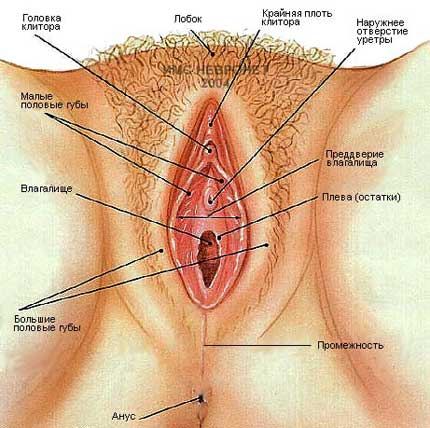 Женская мастурбация - почему женщины занимаются онанизмом?