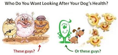 Probiotics for Dogs – Digestive, Cognitive Health - Ottawa Dog Training And Dog Health Adviser