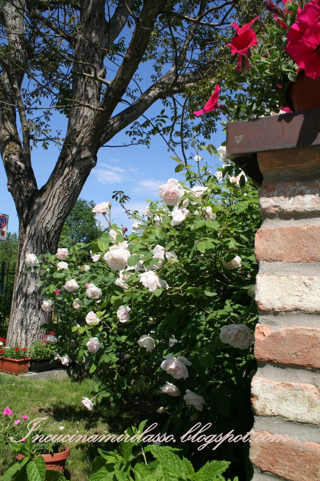 In cucina mi rilasso sbocciano le rose in giardino e in cucina - Rose coltivazione in giardino ...