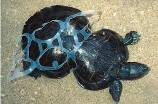 Plastic bags kill keep our oceans clean - Plastic Bags Kill Keep Our Oceans Clean 9