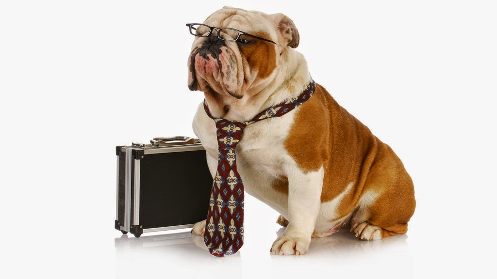 Office bulldog (Credit: Shutterstock) Click to Enlarge.
