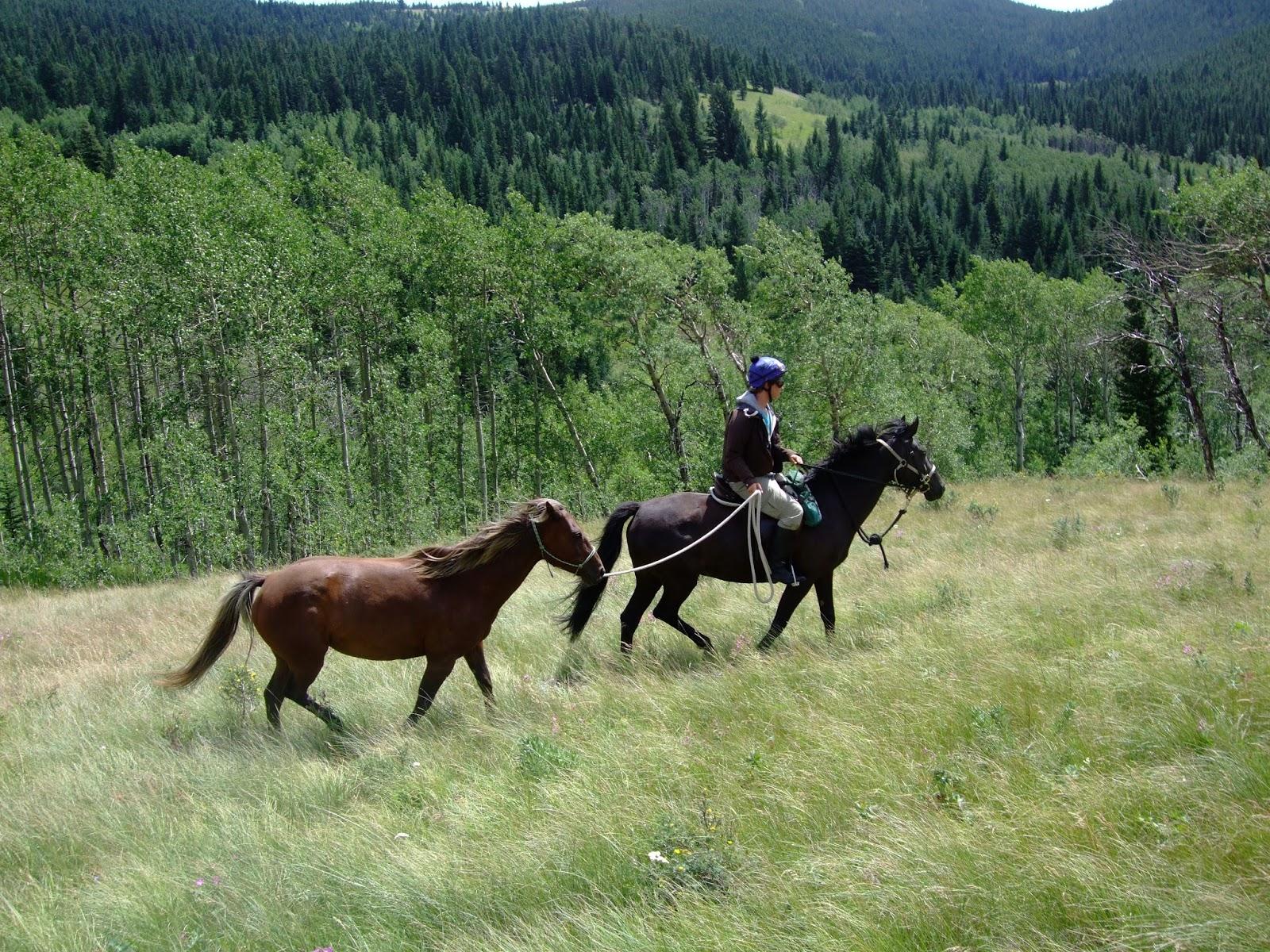 Simple   Wallpaper Horse Flicka - Flicka%2BBob%2BCreek%2B2  Pictures_488160.jpg
